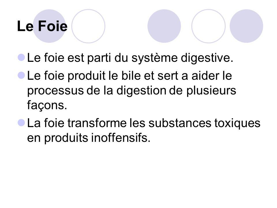 Le Foie Le foie est parti du système digestive.
