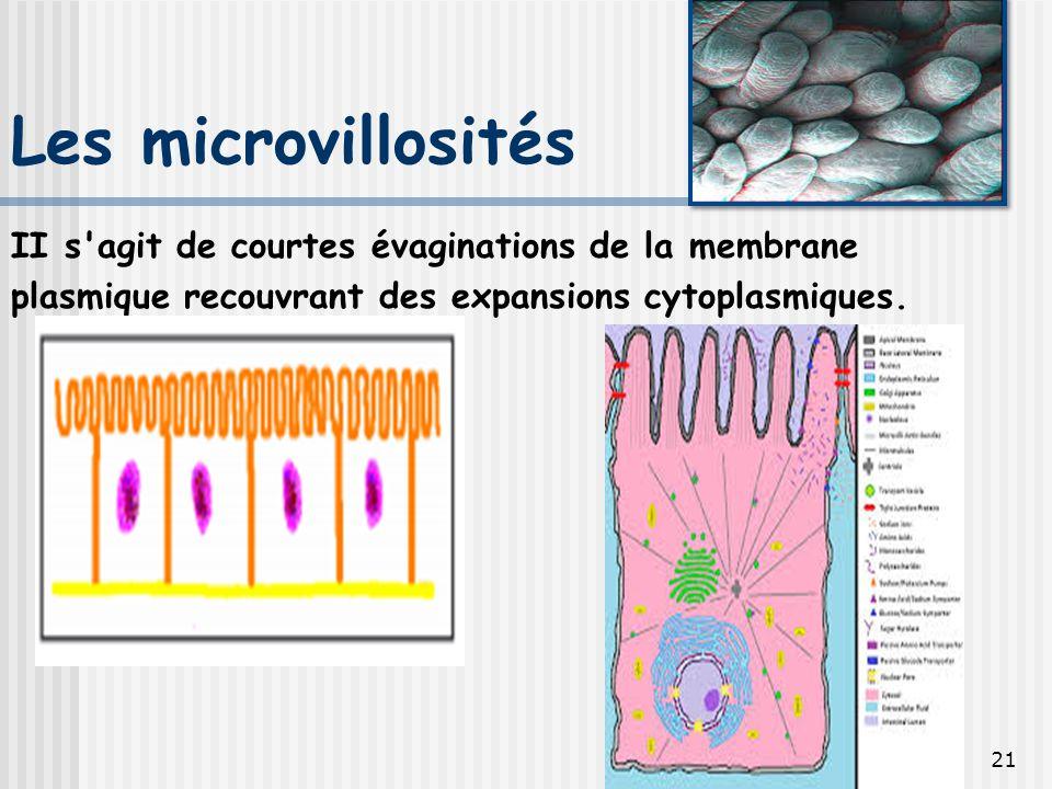 Les microvillosités II s agit de courtes évaginations de la membrane plasmique recouvrant des expansions cytoplasmiques.