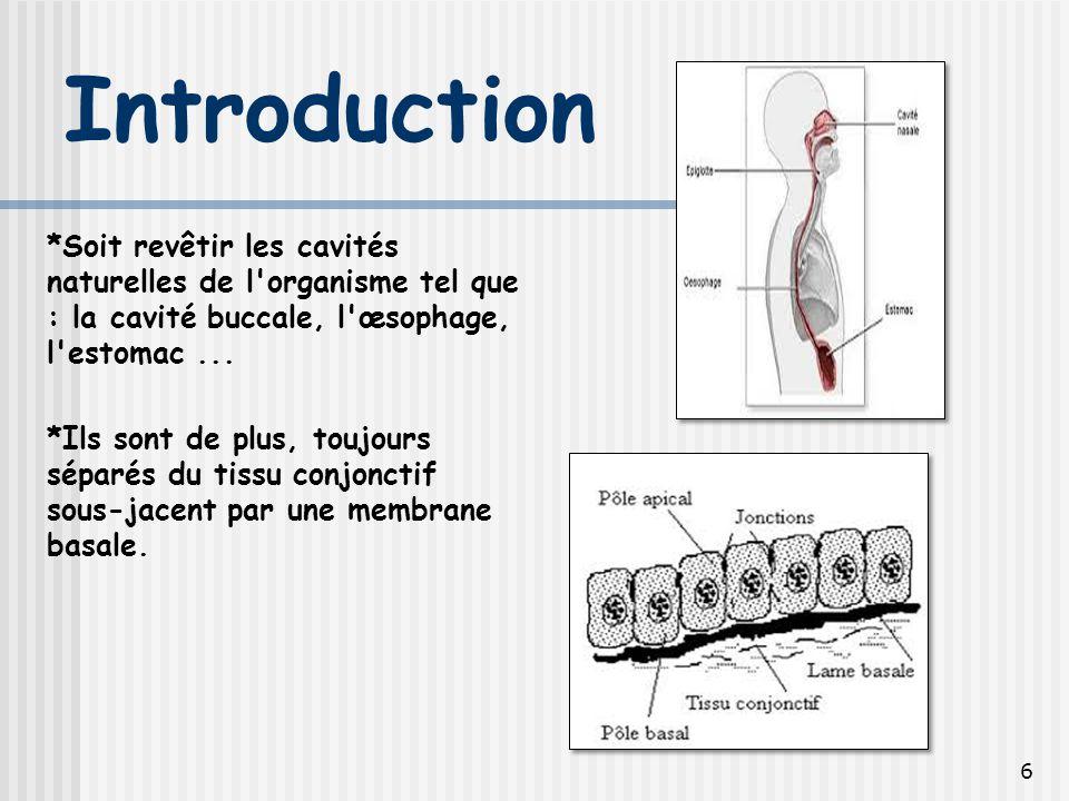 Introduction *Soit revêtir les cavités naturelles de l organisme tel que : la cavité buccale, l œsophage, l estomac ...