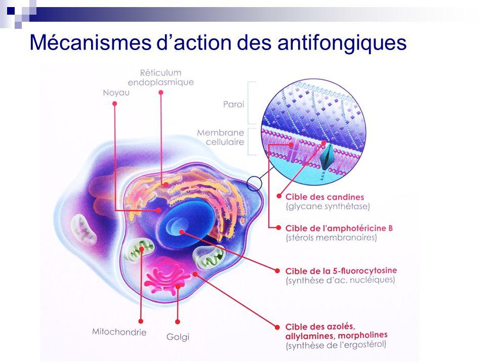 Thomas Dantin Pharmacien CHU Nice 7 Novembre ppt télécharger