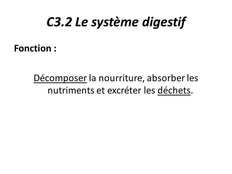 C3.2 Le système digestif Fonction :