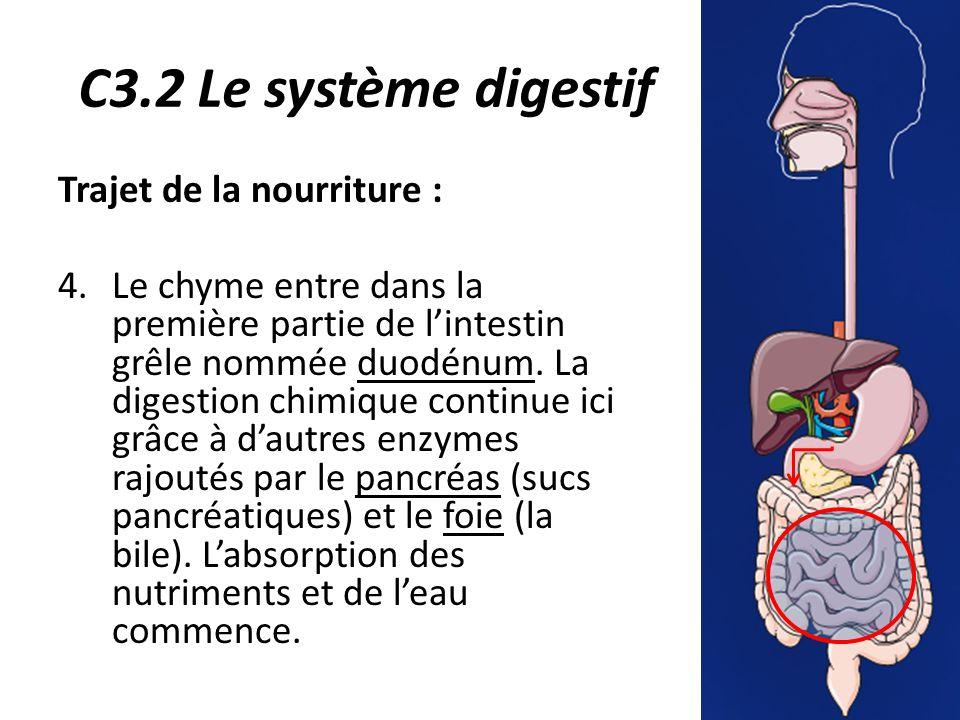 C3.2 Le système digestif Trajet de la nourriture :