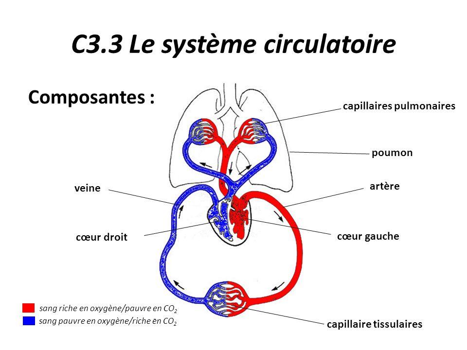 C3.3 Le système circulatoire