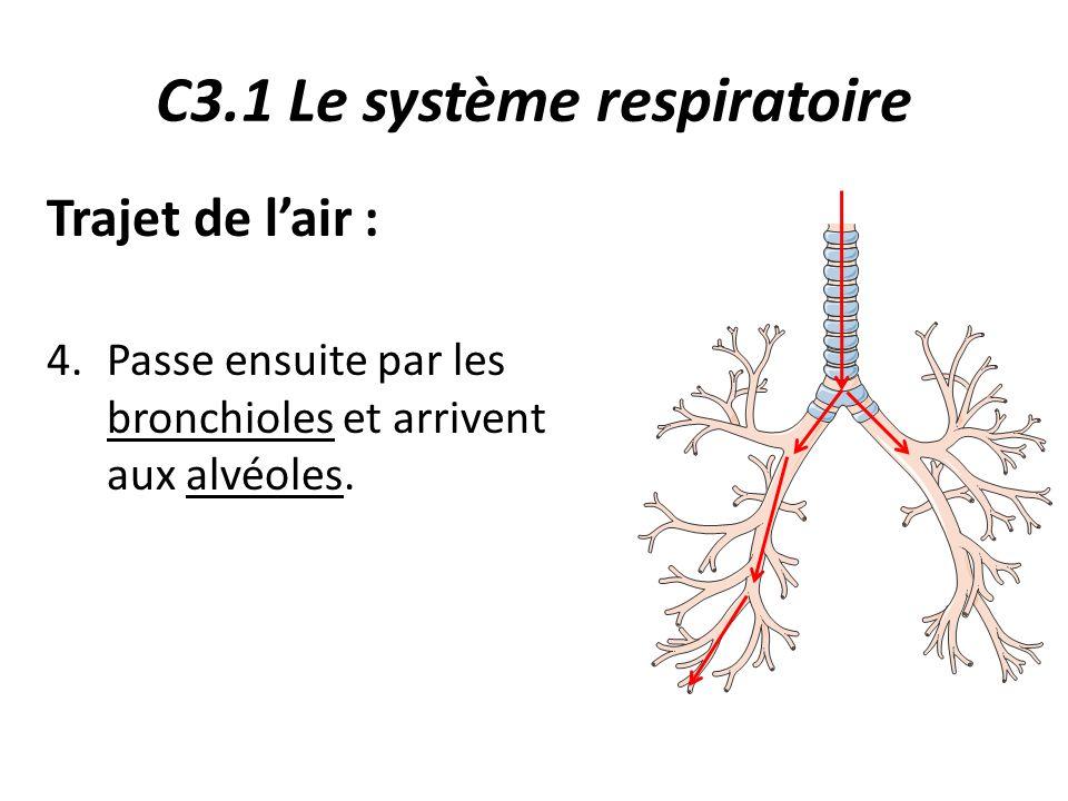 C3.1 Le système respiratoire