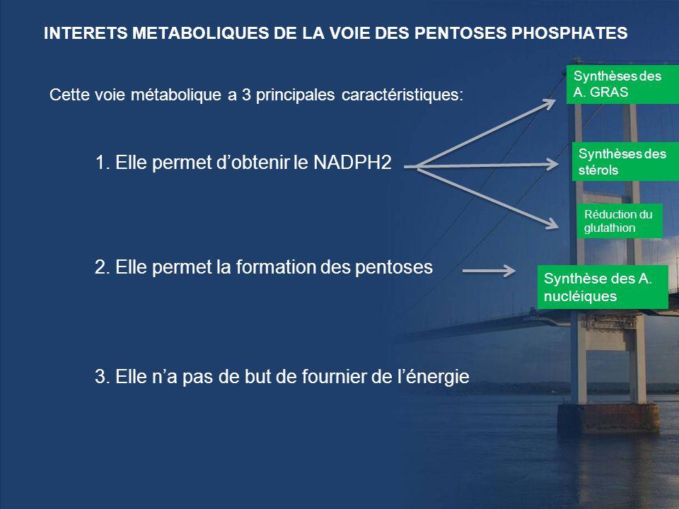 La voie des pentoses phosphates ppt video online t l charger for Dans cette voie