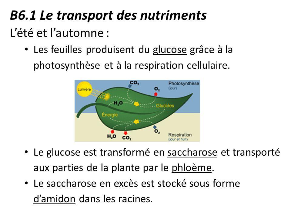 B anatomie v g tale snc2d ppt video online t l charger for Vers dans les plantes