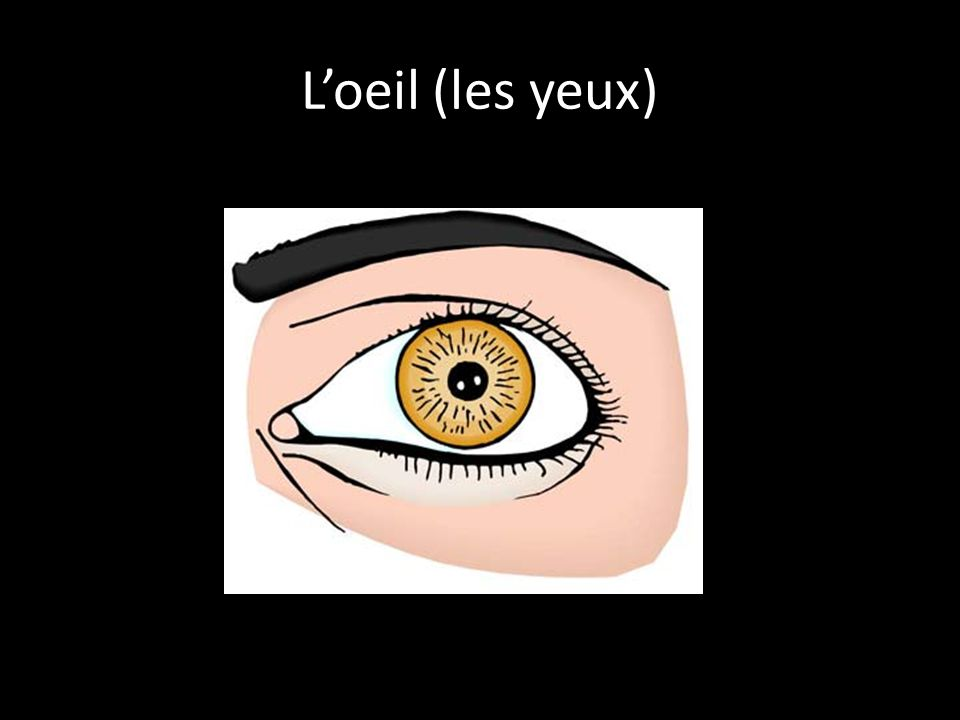 L'oeil (les yeux)