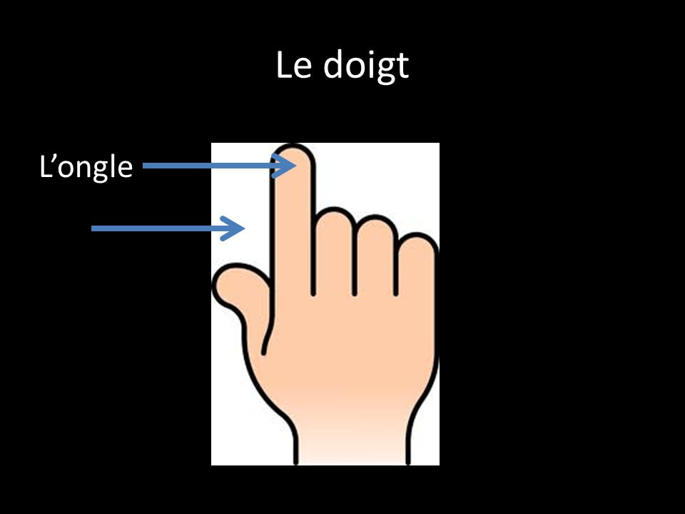 Le doigt L'ongle