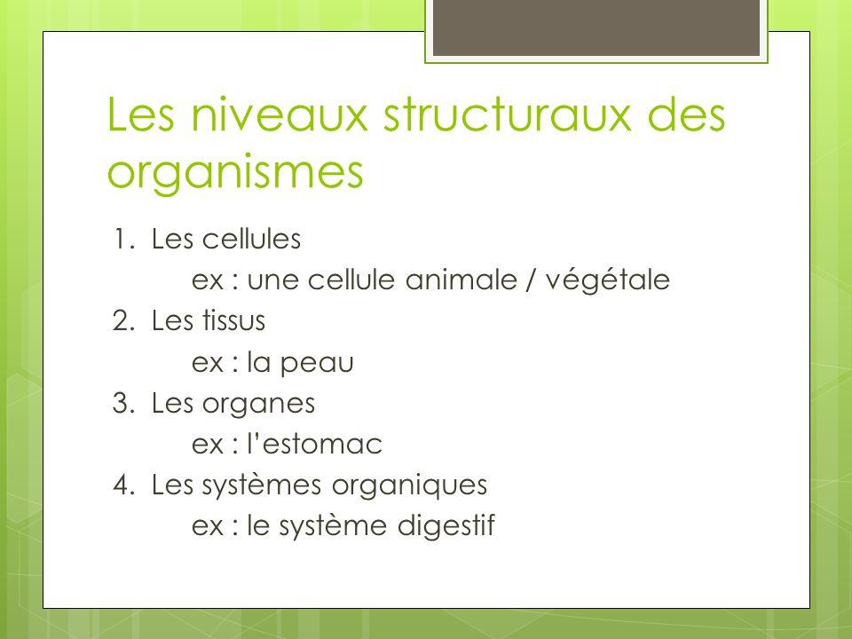 Les niveaux structuraux des organismes
