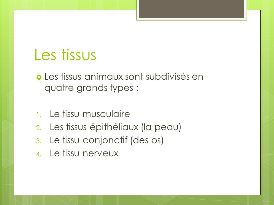 Les tissus Les tissus animaux sont subdivisés en quatre grands types :