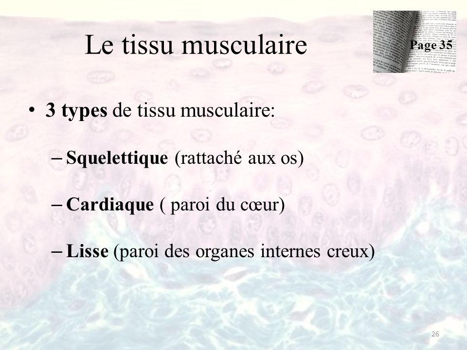 Le tissu musculaire 3 types de tissu musculaire: