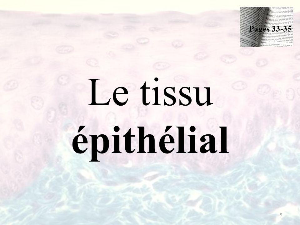 Pages 33-35 Le tissu épithélial