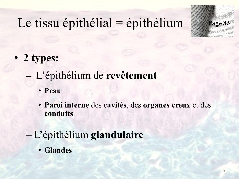 Le tissu épithélial = épithélium