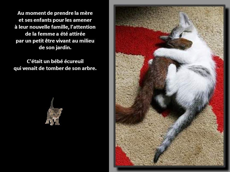 Une bonne maman une maman chat qui adopte un b b - Combien de portee par an pour un chat ...