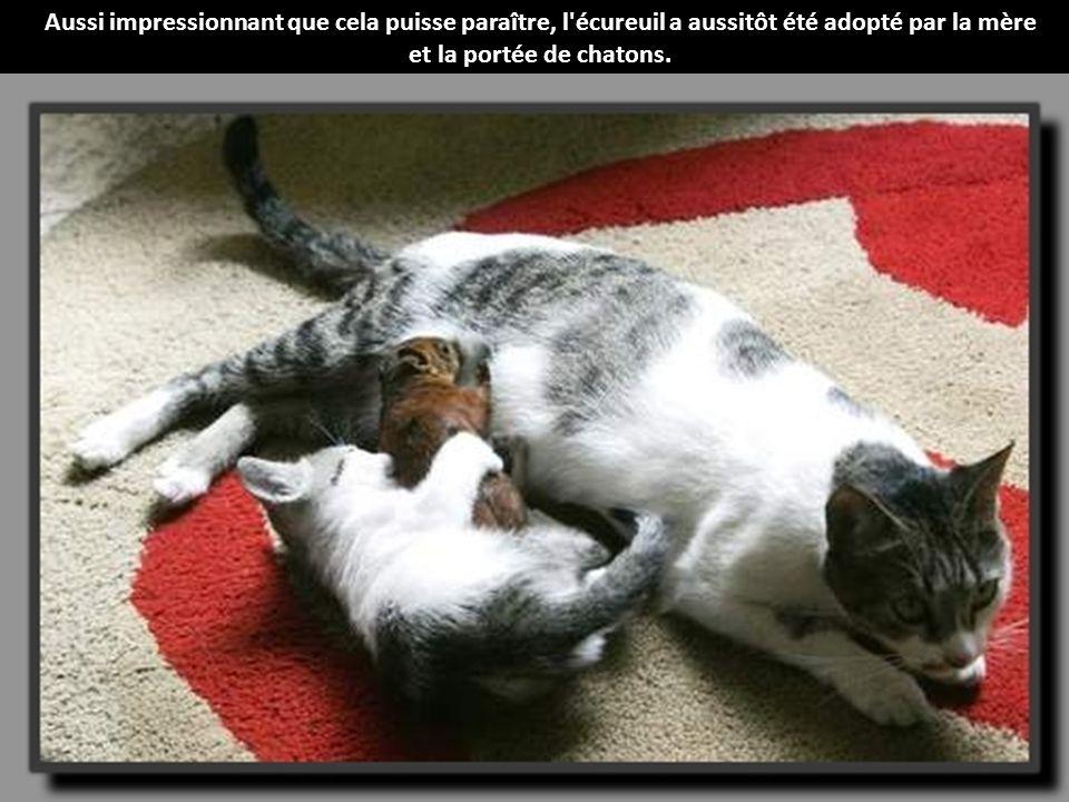 une bonne maman une maman chat qui adopte un b 233 b 233 233 cureuil en plus de sa port 233 e de chatons y a