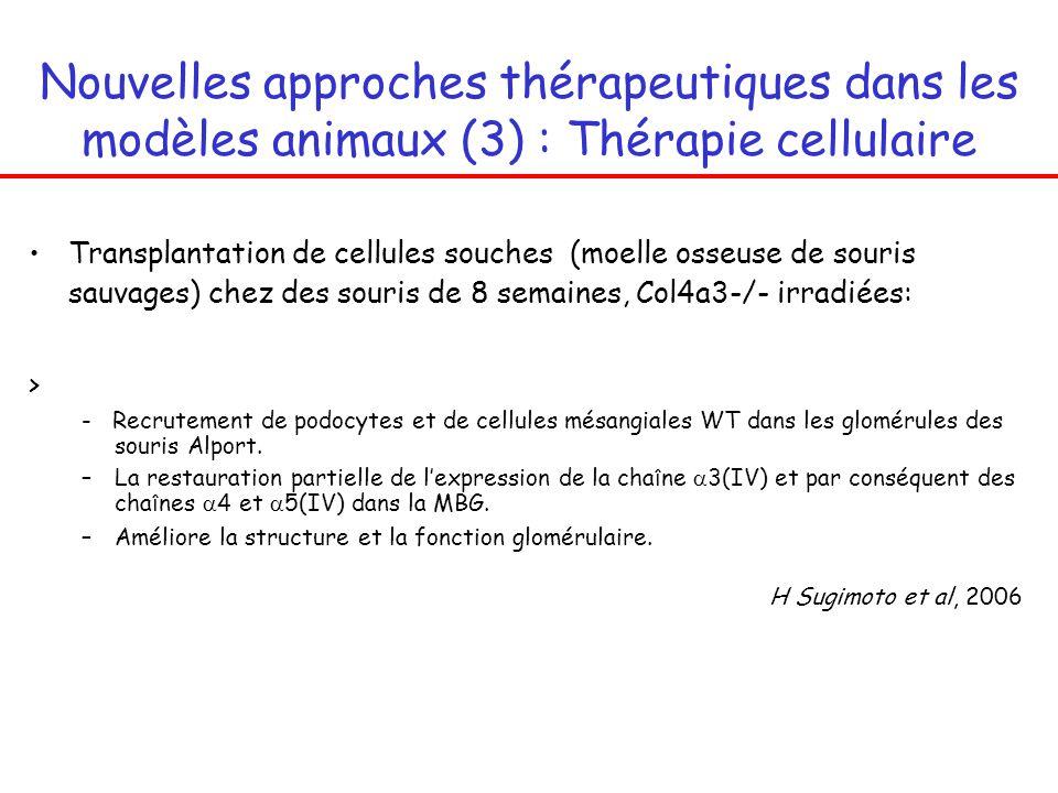 maladies h u00e9r u00e9ditaires de la membrane basale glom u00e9rulaire