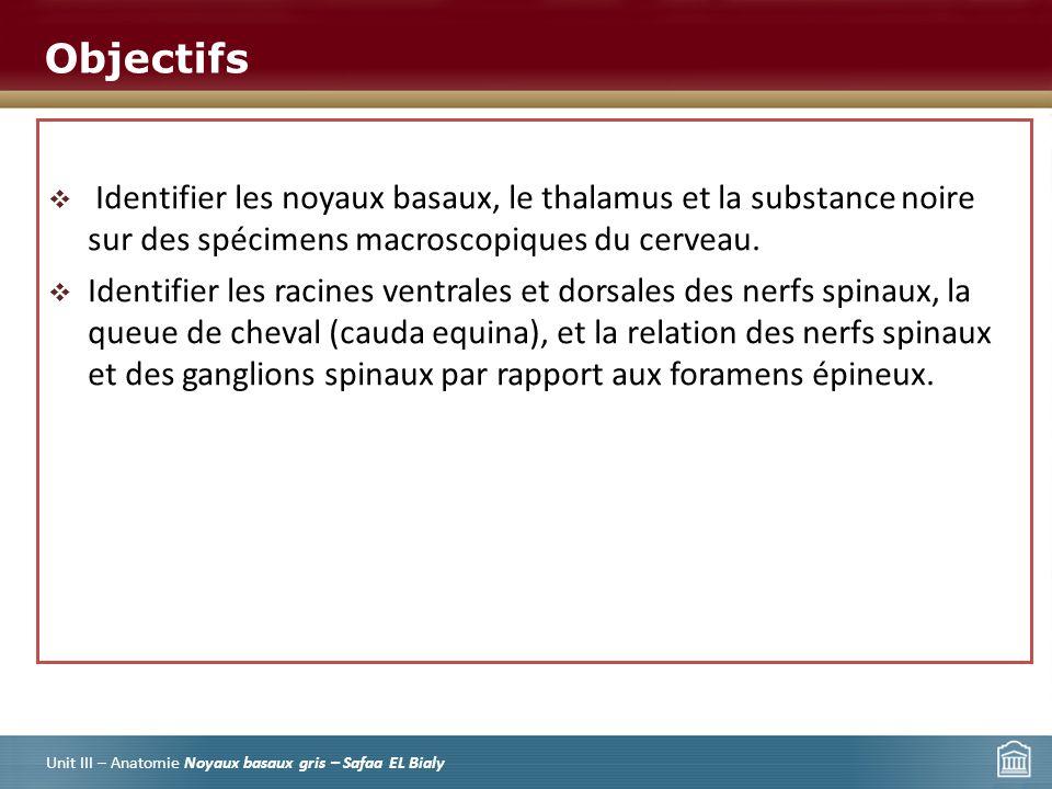 Les noyaux gris basaux et la moelle épinière - ppt video online ...