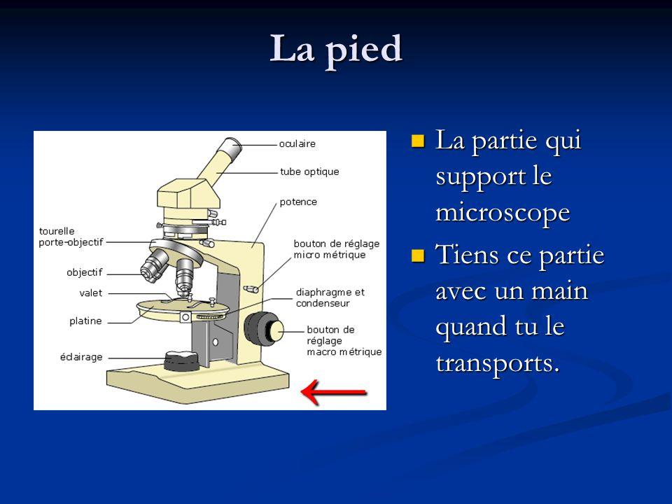 ← La pied La partie qui support le microscope