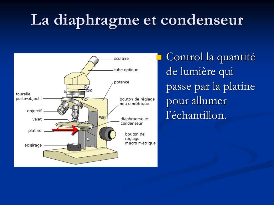La diaphragme et condenseur