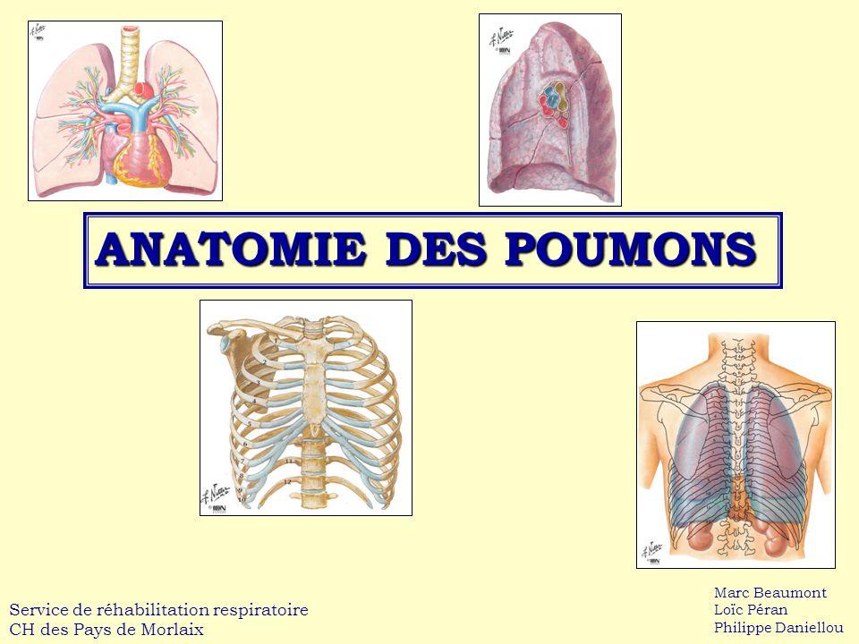 ANATOMIE DES POUMONS Service de réhabilitation respiratoire