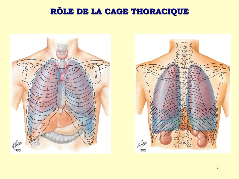 RÔLE DE LA CAGE THORACIQUE