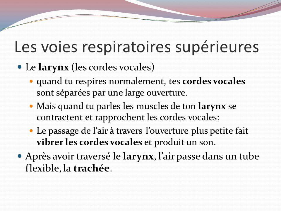 Les voies respiratoires supérieures