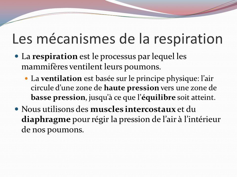Les mécanismes de la respiration