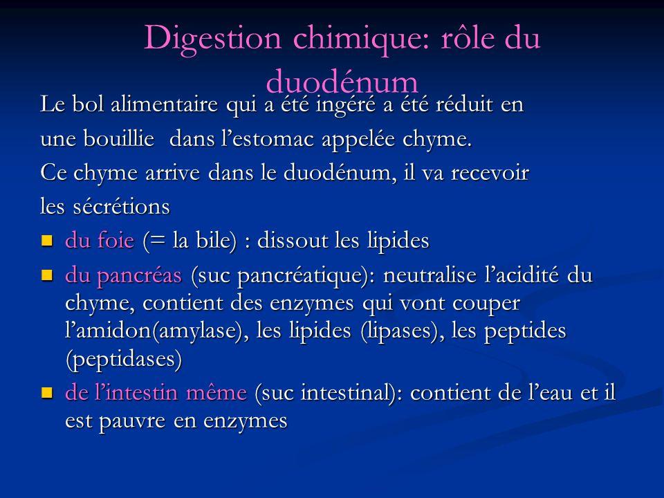 Digestion chimique: rôle du duodénum