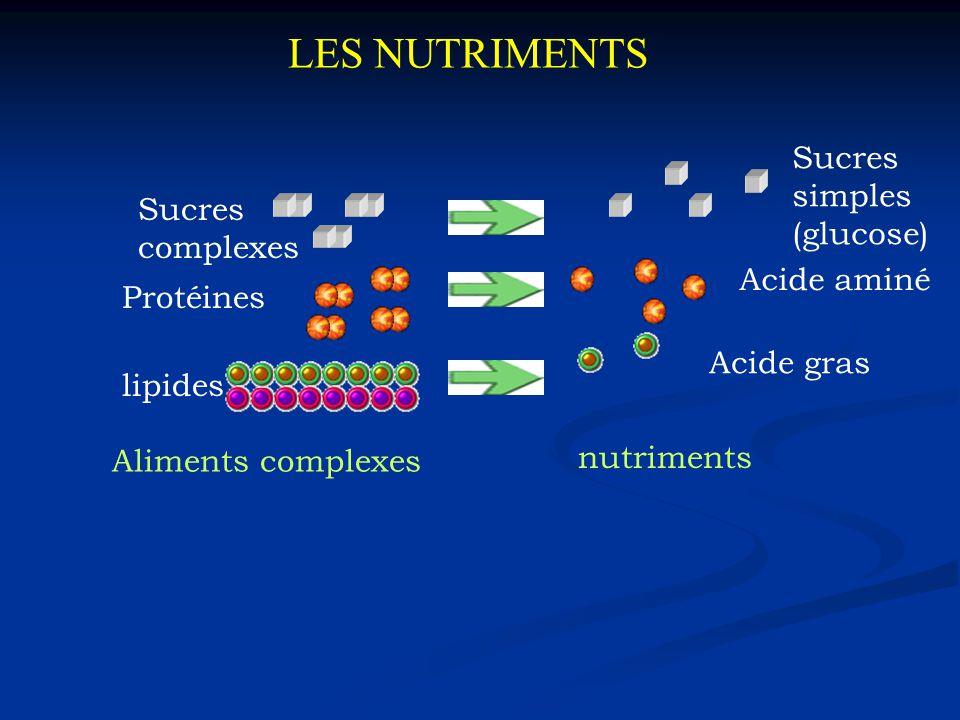 LES NUTRIMENTS Sucres simples (glucose) Sucres complexes Acide aminé
