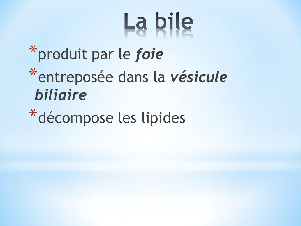 La bile produit par le foie entreposée dans la vésicule biliaire