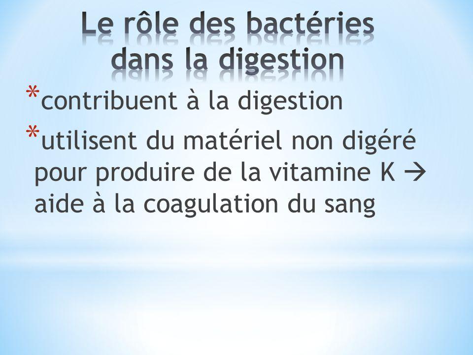 Le rôle des bactéries dans la digestion