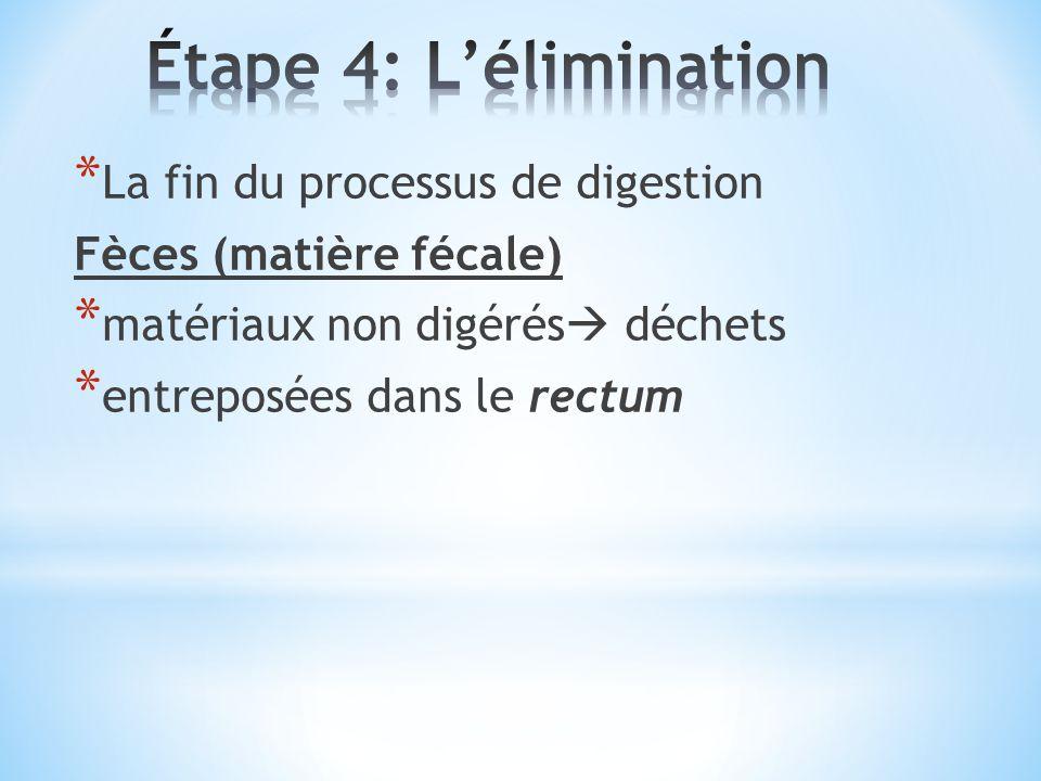 Étape 4: L'élimination La fin du processus de digestion