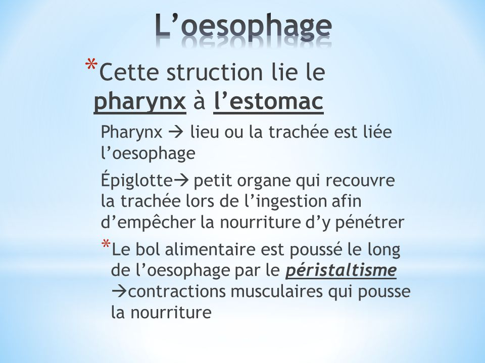 L'oesophage Cette struction lie le pharynx à l'estomac