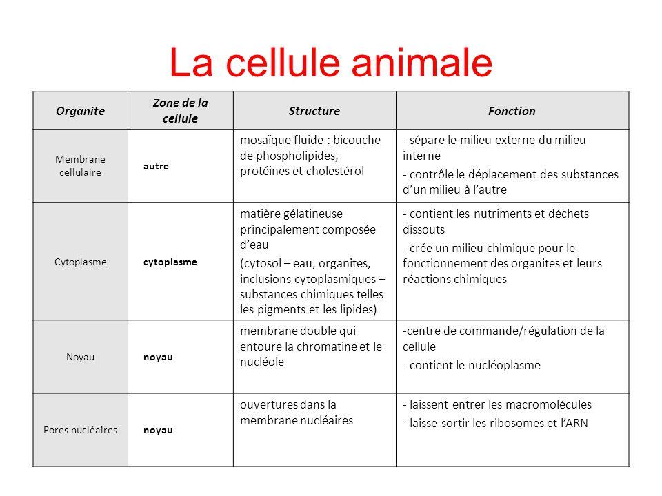 La cellule animale Organite Zone de la cellule Structure Fonction