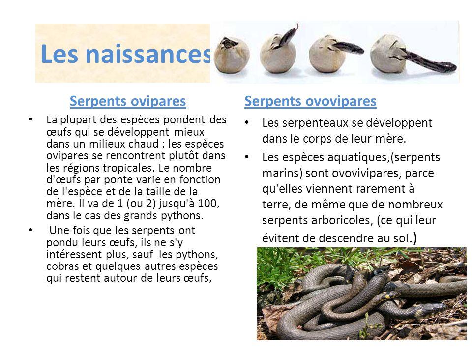 Les naissances Serpents ovipares Serpents ovovipares