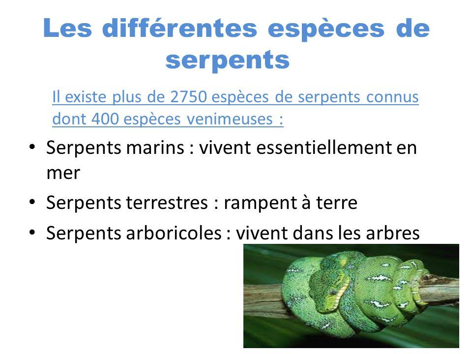 Les différentes espèces de serpents