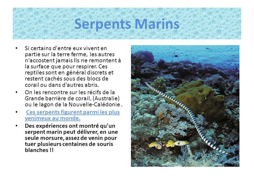 Serpents Marins
