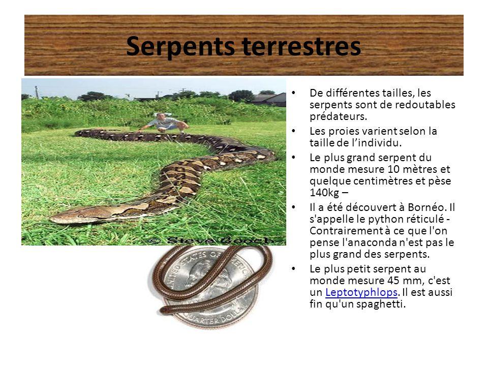 Serpents terrestres De différentes tailles, les serpents sont de redoutables prédateurs. Les proies varient selon la taille de l'individu.