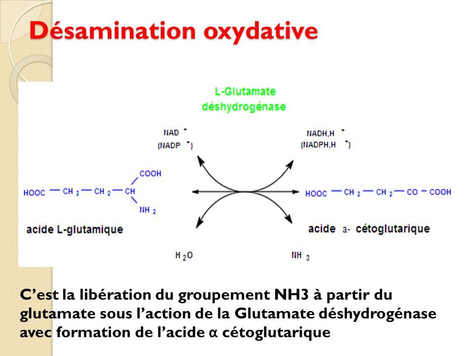 Désamination oxydative