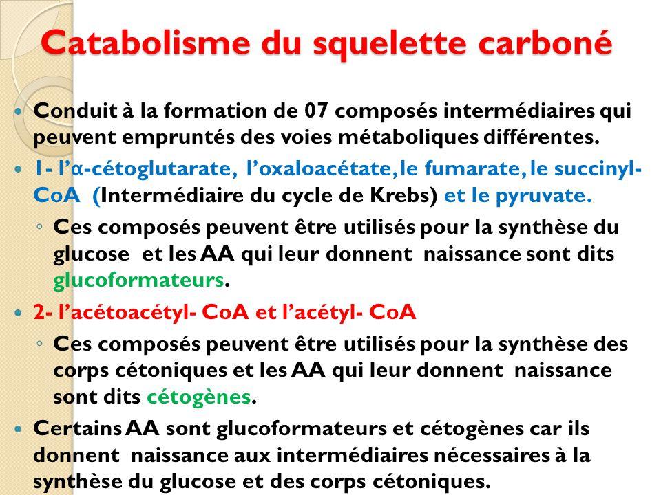 Catabolisme du squelette carboné