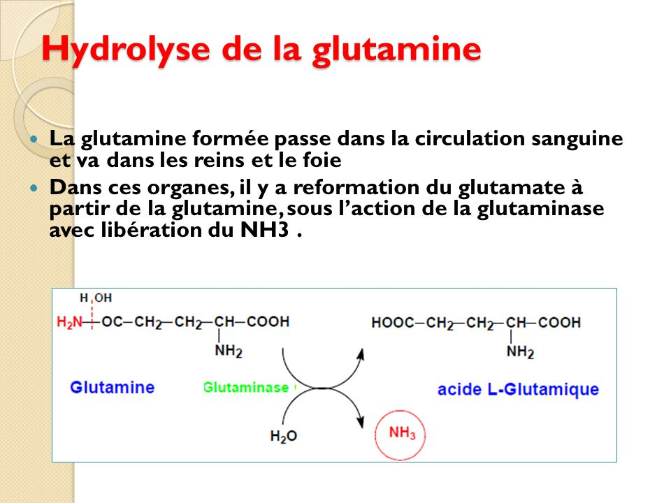 Hydrolyse de la glutamine