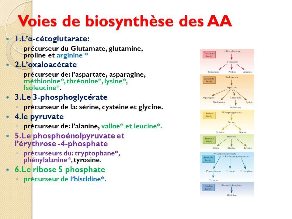 Voies de biosynthèse des AA