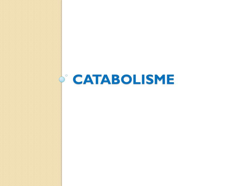 catabolisme