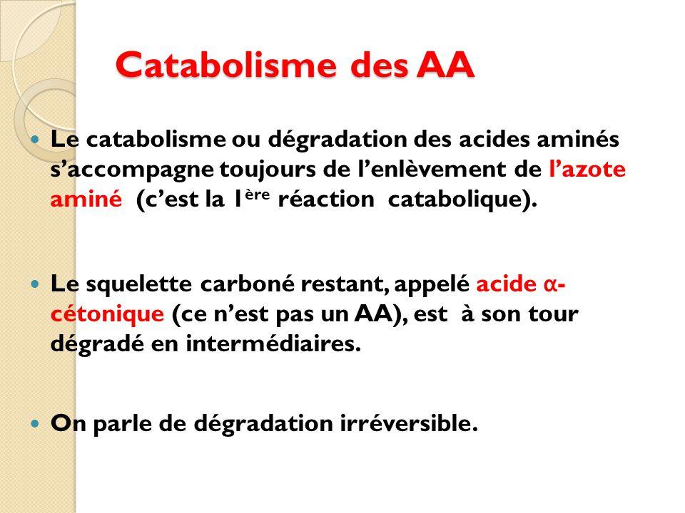 Catabolisme des AA