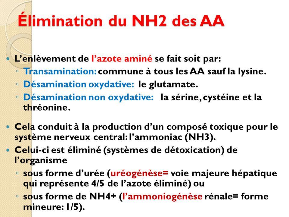 Élimination du NH2 des AA
