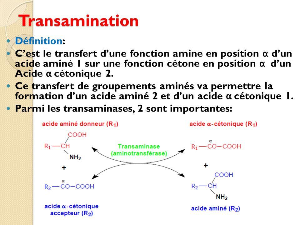 Transamination Définition: