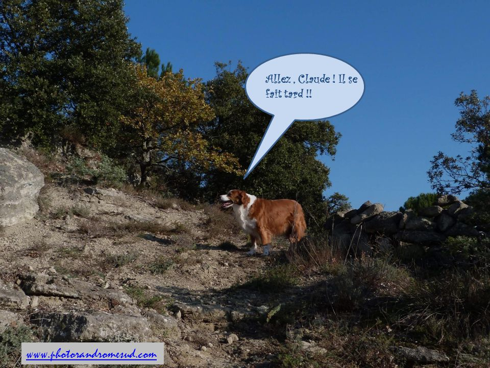 Allez , Claude ! Il se fait tard !!