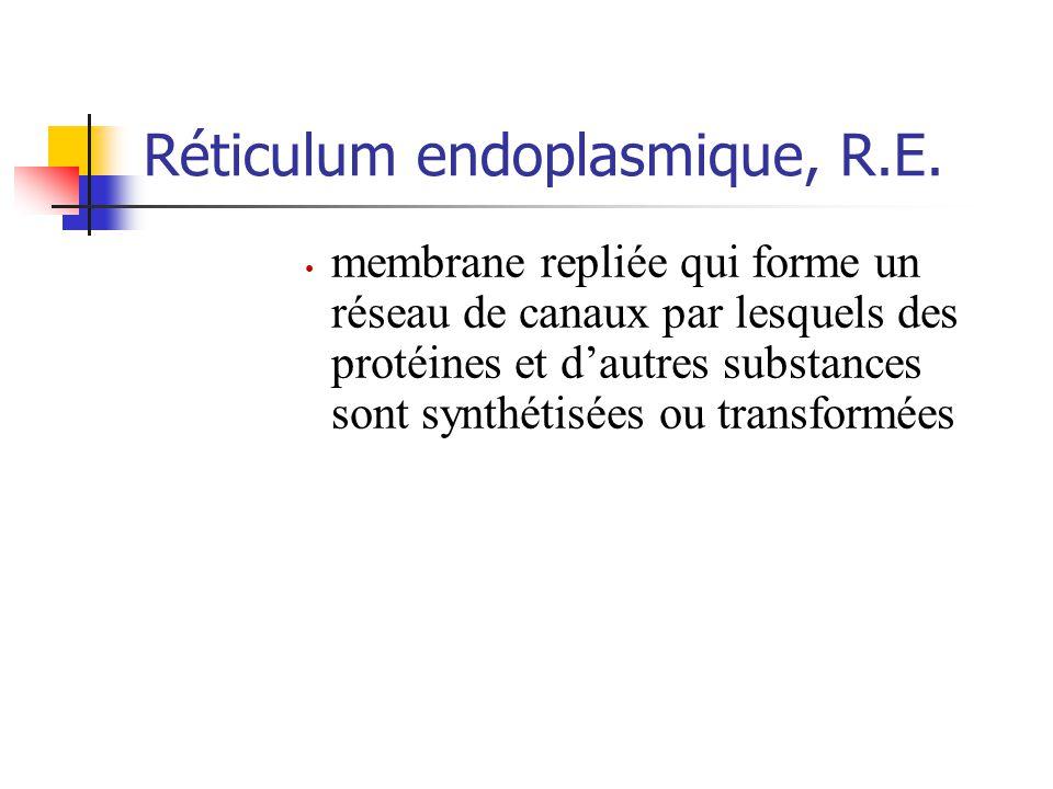 Réticulum endoplasmique, R.E.