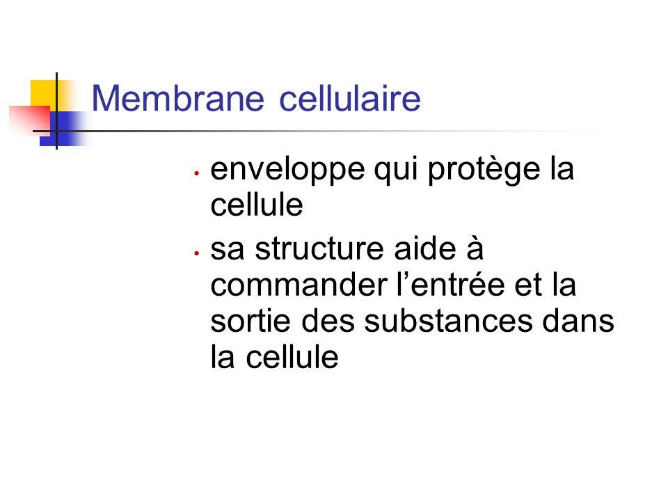 Membrane cellulaire enveloppe qui protège la cellule