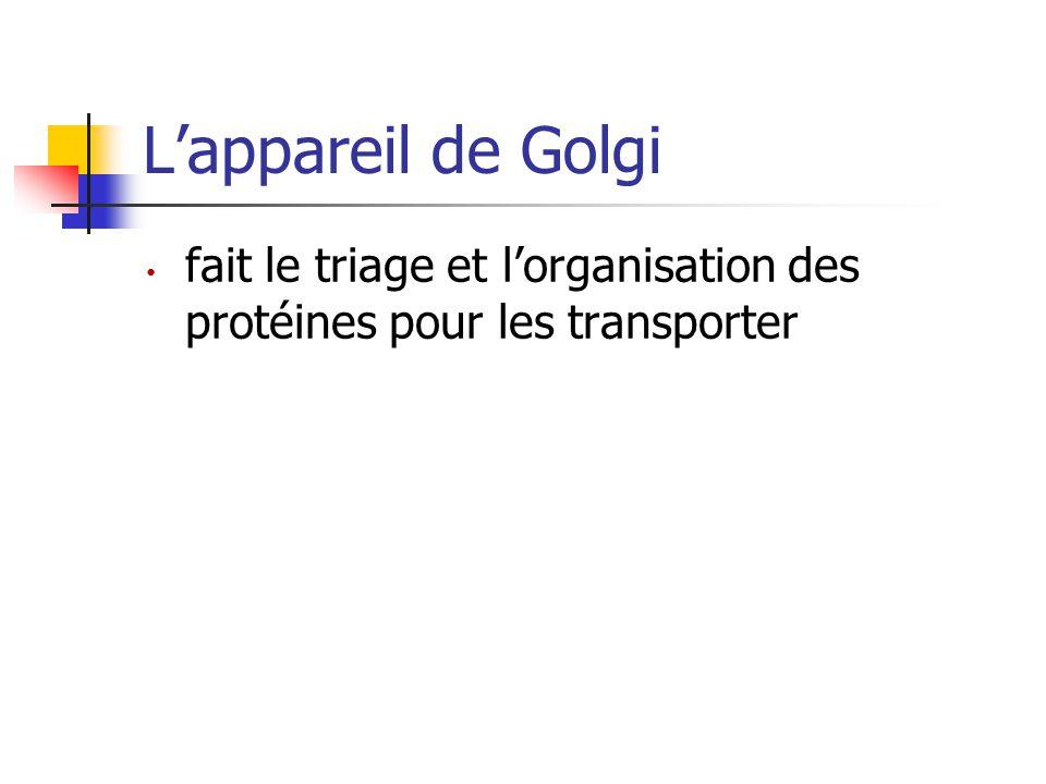 L'appareil de Golgi fait le triage et l'organisation des protéines pour les transporter